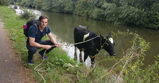 The curious incident of the cow in the canal