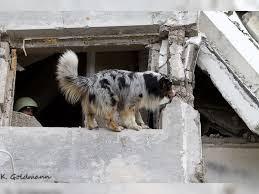 cães de serviços