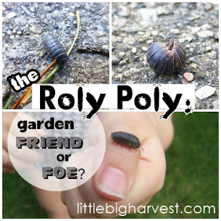 http://www.littlebigharvest.com/2015/05/the-roly-poly-garden-friend-or-foe.html