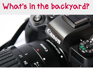 "close up of a Canon camera with the words ""What's in the backyard?"" above the picture"
