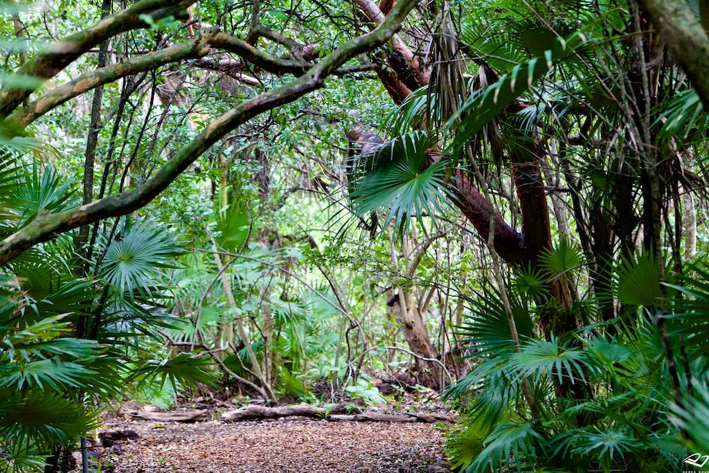 Derek Brad Photography: The Key West Tropical Forest & Botanical Garden