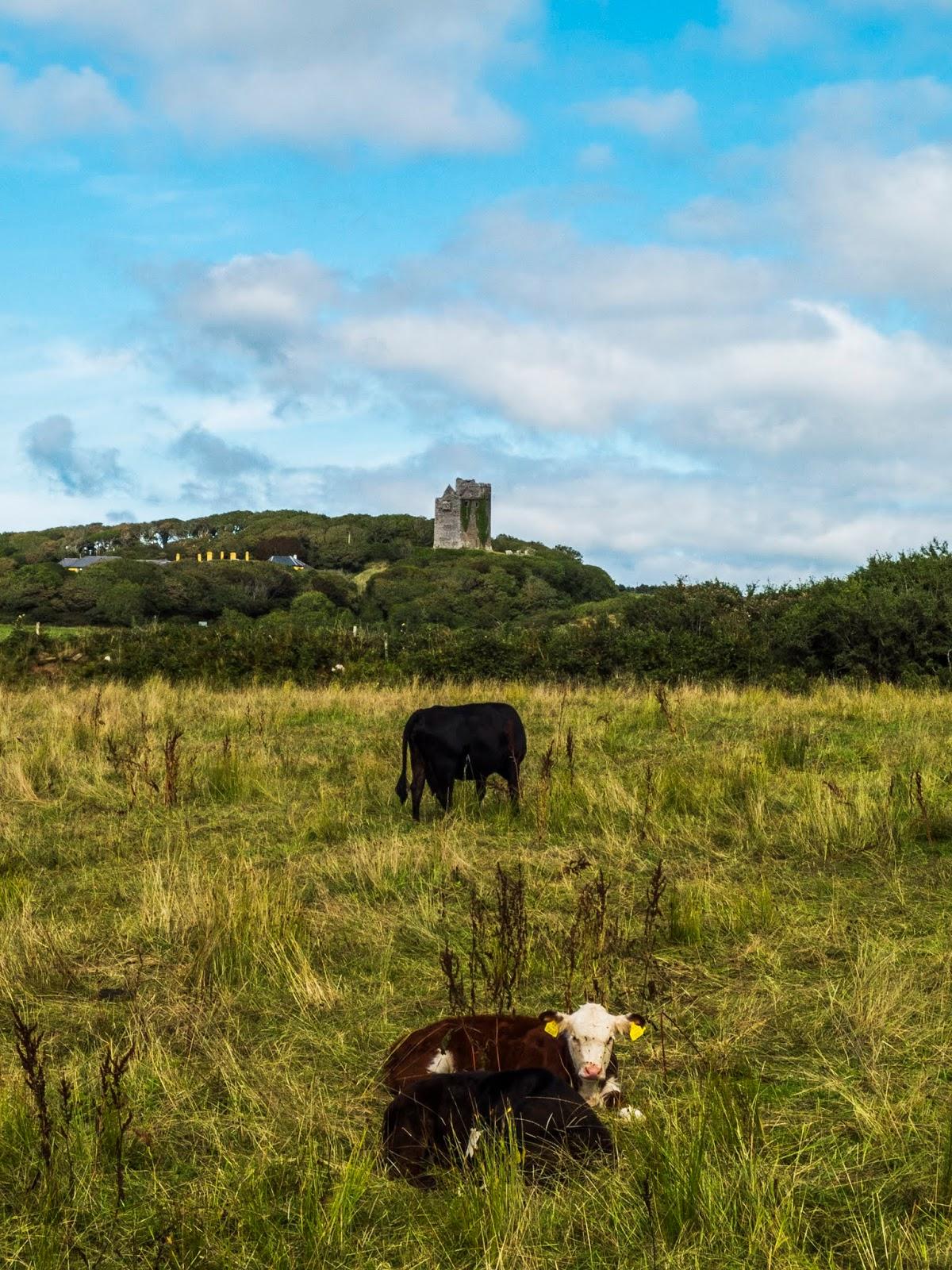 A view of the Ballinalacken Castle as seen from the Doolin Caves in County Clare.