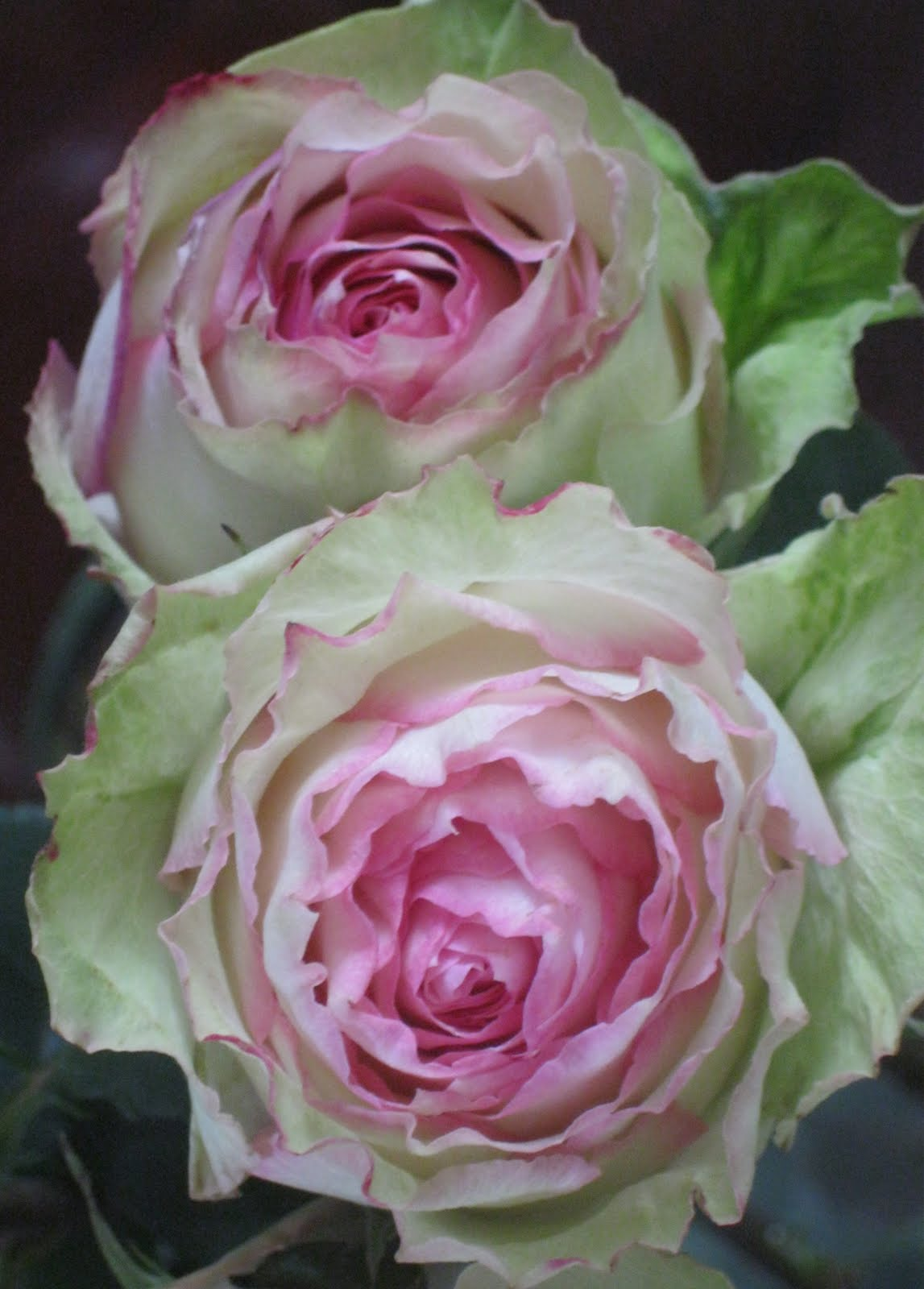...Make It With Me: Beautiful Pink and Green Roses.