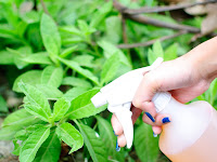 Tinggalkan Pestisida dan Mulailah Beralih ke Bahan Alami