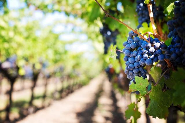 uvas para la artritis