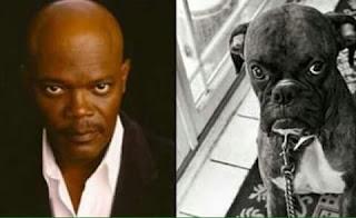 Perros que se parecen a sus dueños famosos - Samuel Leroy Jackson
