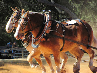 Image result for Team of pulling horses