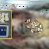 Mayat Ditemui Dengan 33 Paket Dadah Dalam Perut