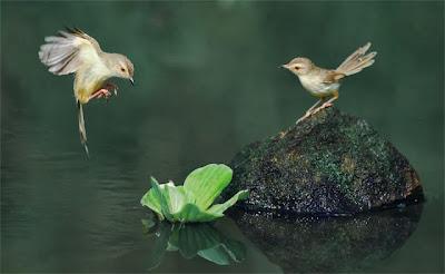 صورة رائعة وجميلة تمزج جمال الطبيعة من طيور ومياه وورود