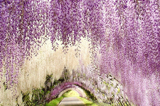 Japanese Wisteria Gardens was the inspiration for designer Tadashi Shoji's Spring Summer 16 collection