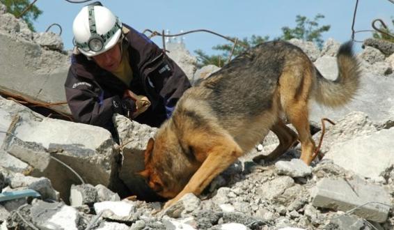 La Hermosa Labor De Los Perros Rescatistas poster box cover