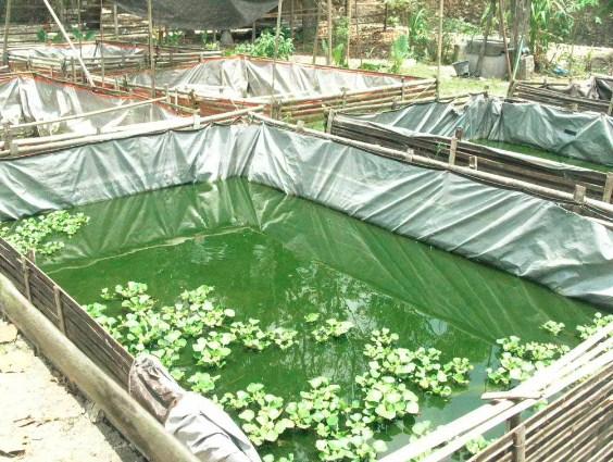 Materi Tertayang Penyuluhan Perikanan Teknik Pembesaran Ikan Nila