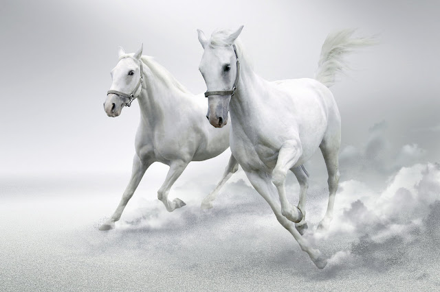Hevonen tapetti