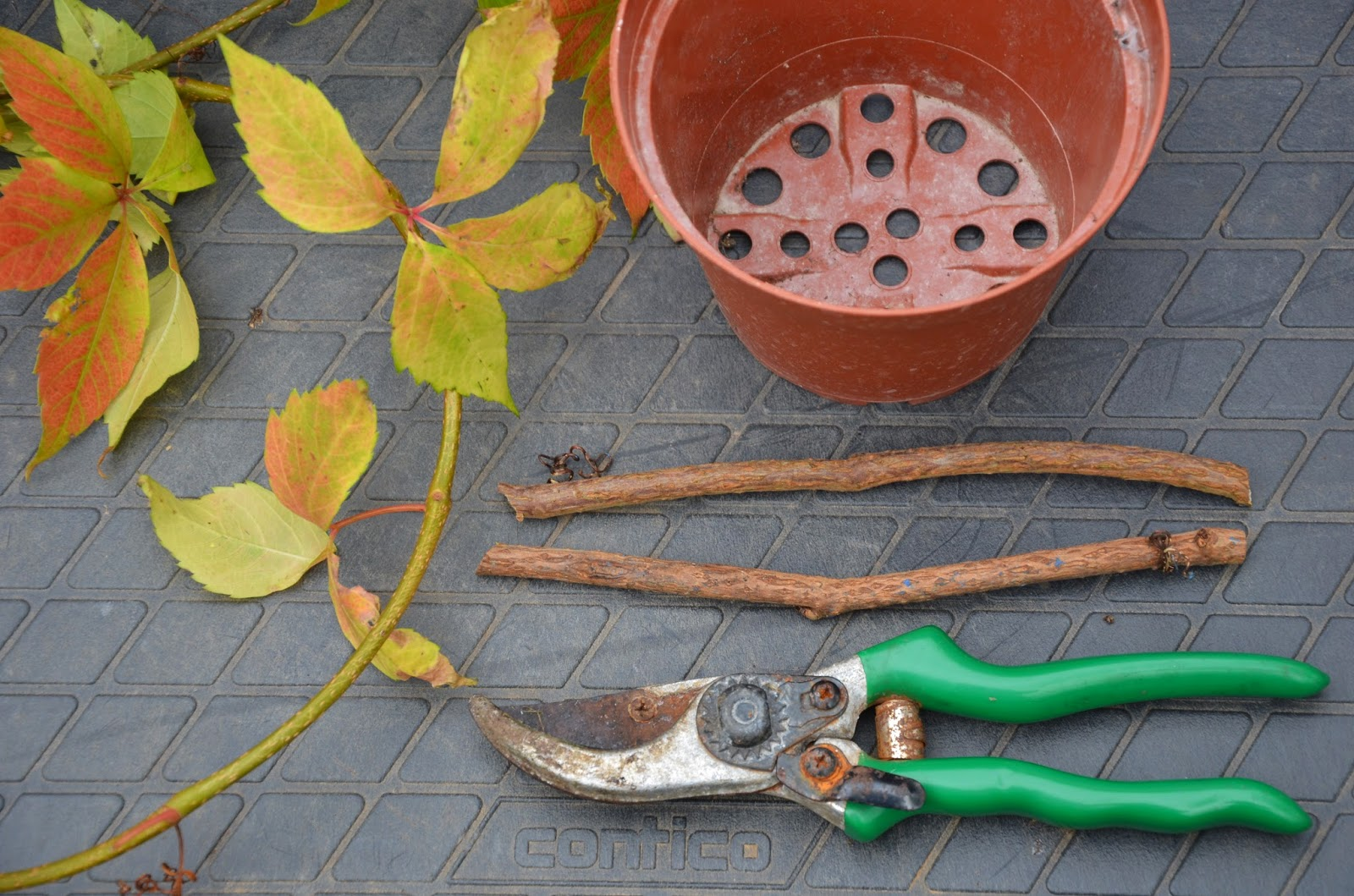 How To Grow The Virginia Creeper From Cuttings The Garden
