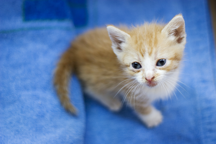 Cute Science Wallpaper Cute Baby Cats Cool Stories And Photos