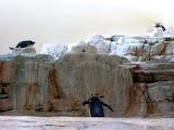 pinguini cataratori