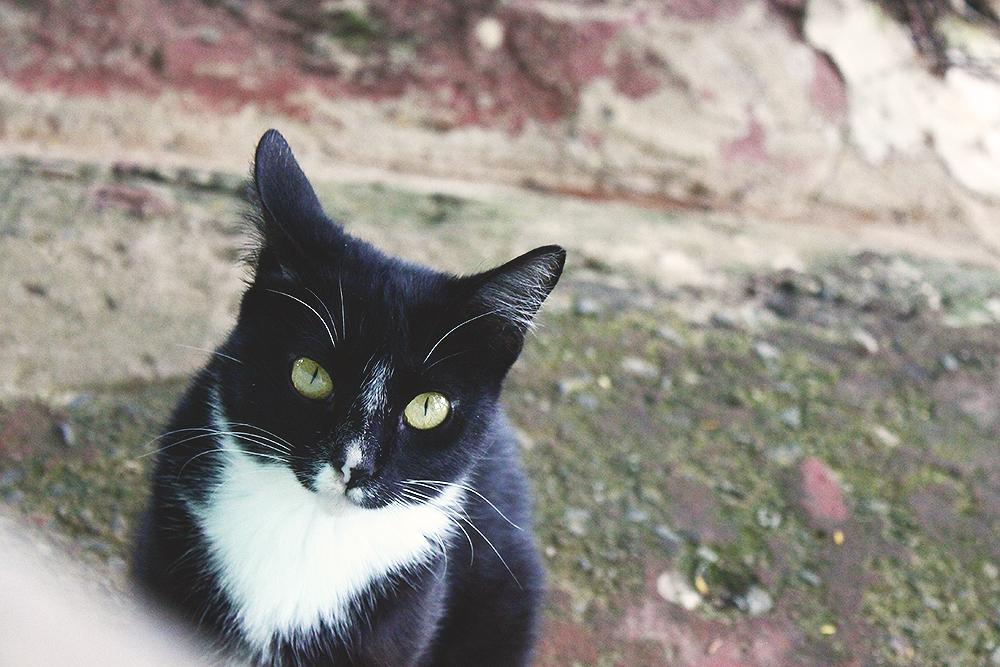 gato-preto-branco-olhos-verdes-claro