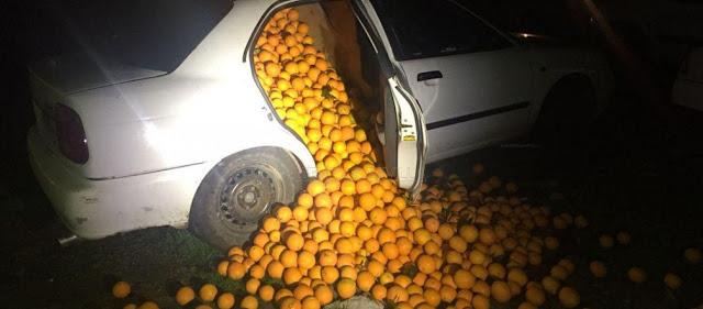Έκλεψαν 4 τόνους πορτοκάλια και γέμισαν δύο ΙΧ αυτοκίνητα για να τα μεταφέρουν