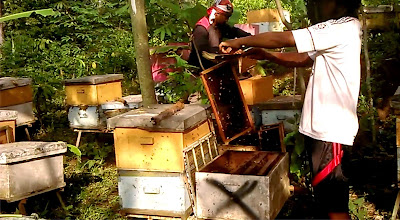 madu asli, supplier madu asli, madu kebumen, supplier madu asli kebumen, penjual madu asli dikebumen, jual madu asli kebumen, tempat jual madu kebumen, harga madu kebumen, beli madu asli dikebumen, supplier madu asli jawa tengah, peternak lebah madu kebumen, peternak lebah jawa tengah, toko madu asli dikebumen, pusat madu asli kebumen, pusat madu kebumen, grosir madu asli kebumen, madu curah kebumen, maklon madu asli kebumen jawa tengah, kemasan madu polos di kebumen, distributor madu asli kebumen, pengecer madu asli kebumen, pemasok madu asli kebumen jawa tengah,