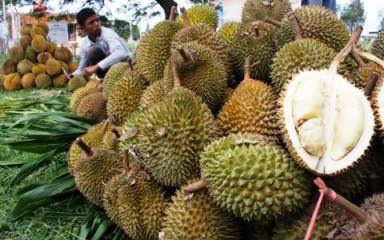 macam karna disetiap tempat mempunyai ciri khas tersendiri dari buah ini 18 Jenis Buah Durian Di Indonesia