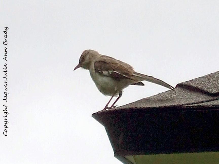 Mockingbird on the Roof
