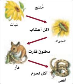 """""""هنا"""" مخطط يوضح كيف تنتقل الطاقه في النظام البيئي"""