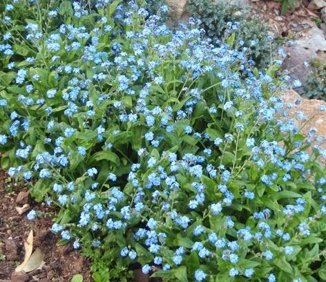 Disfrutar con el huerto y el jard n color en el jard n - Plantas para el jardin todo el ano ...