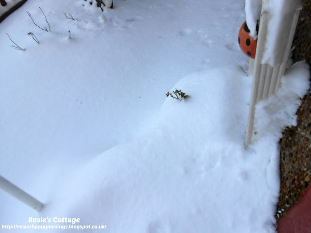 "Siberian winds & snow storms, named ""the beast from the east"" by the media, hits the UK - by the front door, the planter which is home to our mini roses is completely buried under the thick, heavy layer of snow."