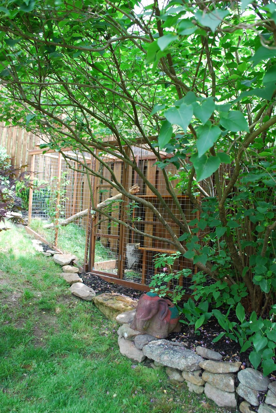 Outdoor Cat Enclosure Diy Easy