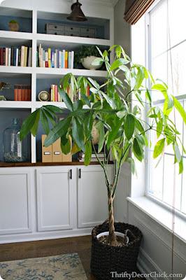 anthemion φυτά