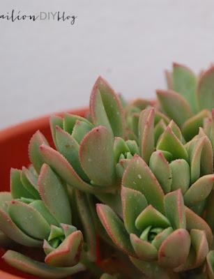 planta facil cuidar cactus