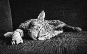 Wallpaper: Zen Of Sleeping Kitten