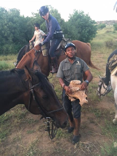 norsu, kallo, botswana, safari, mashatu, hevonen, riitta reissaa