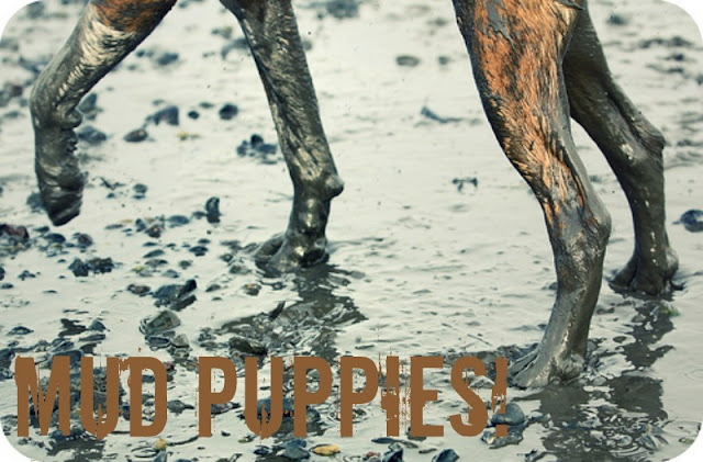 Mud Puppies - 5 Tips To Help Keep Muddy Paw Prinst Off Your Floors