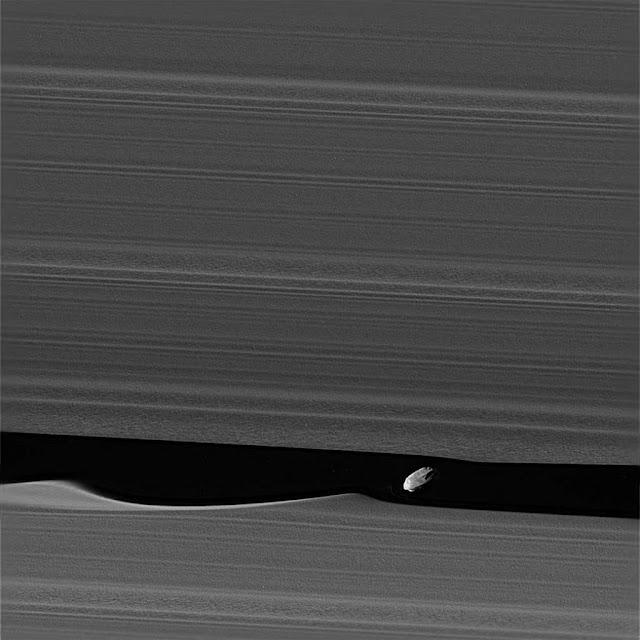 Daphnis tạo ra cơn sóng trên đường đi của nó. Hình ảnh: NASA/JPL.