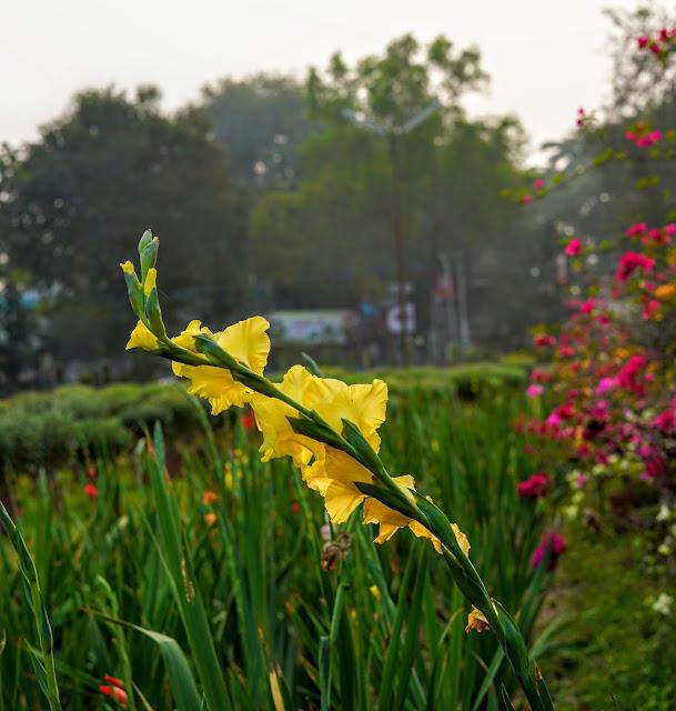 Sourajit Saha Photography 2