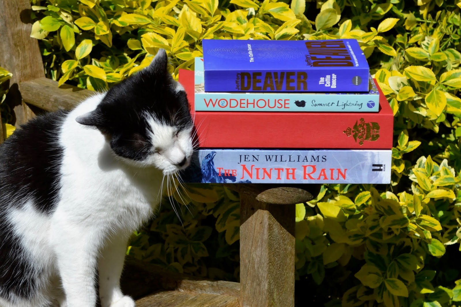 Cat next to The Coffin Dancer by Jeffery Deaver, Summer Lightning by P.G. Wodehouse, Jane Seymour: The Haunted Queen by Alison Weir and The Ninth Rain by Jen Williams.