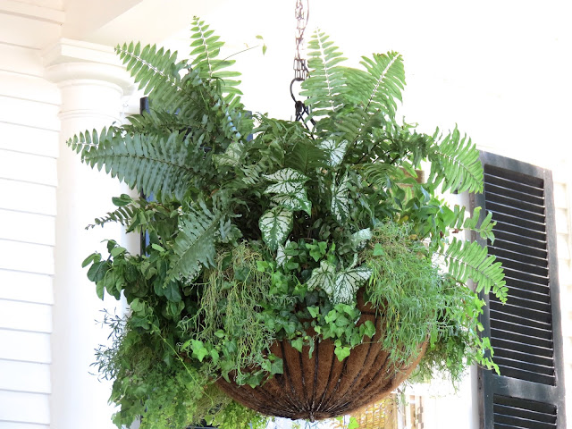 oversized fern hanging plant shade easy to maintain caladium