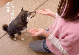 truques para seu cão