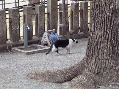 神津神社猫