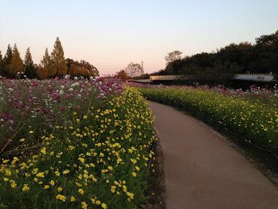 イメージ写真:公園の花壇