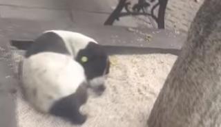 Βίντεο: Η συγκινητική στιγμή που 62χρονος βρίσκει στο δρόμο τον επί τρία χρόνια χαμένο σκύλο του