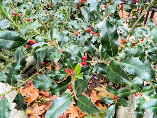 Αφιέρωμα στα Χριστούγεννα-Φτιάξτε τα δικά σας φάρμακα από Χριστουγεννιάτικα φυτά