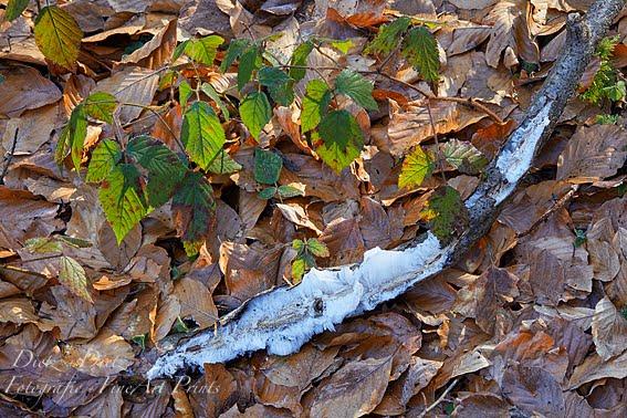 Haareis an Holzstück nach einer windstillen Frostnacht