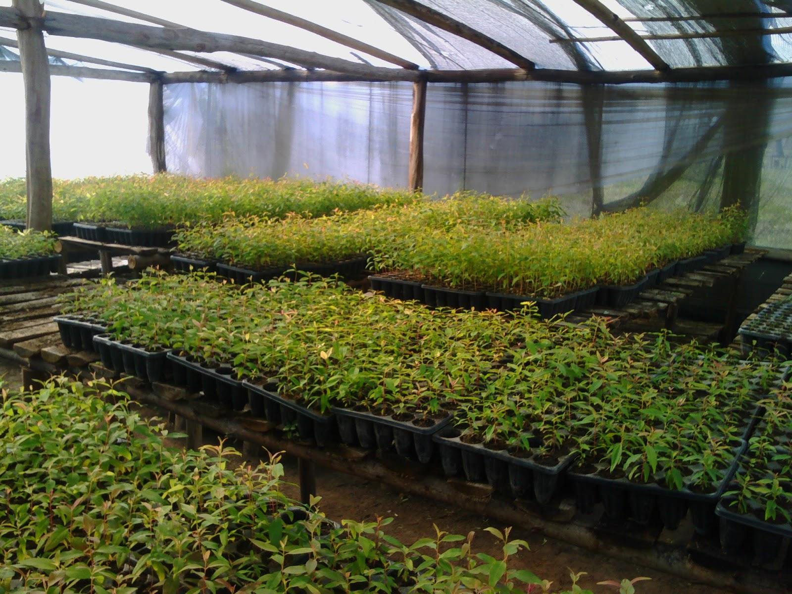 Entre r os forestal visita a viveros forestales de for Proyecto productivo de vivero forestal