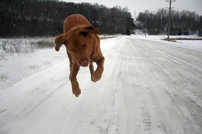 Imagen - foto de perro volador