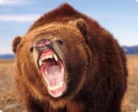 медведь убийца фото