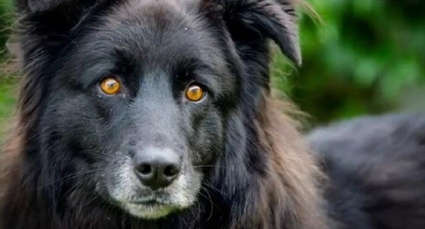 Teneri Cuccioli Notizie Bagheera Il Cane Che Nessuno Vuole