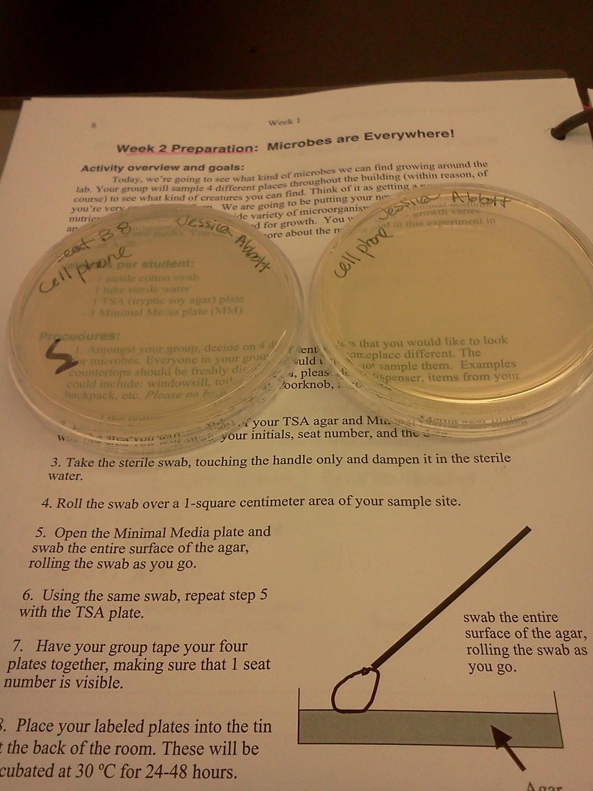 Phone Agar Plate Cell Bacteria