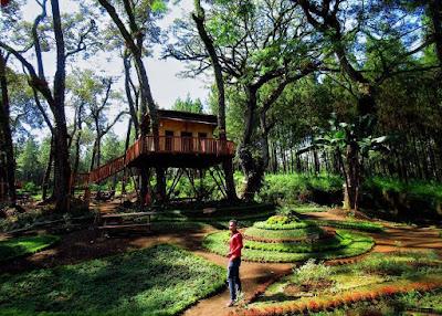 Rute Dan Lokasi Rumah Pohon Kampung Enam Wajak Malang
